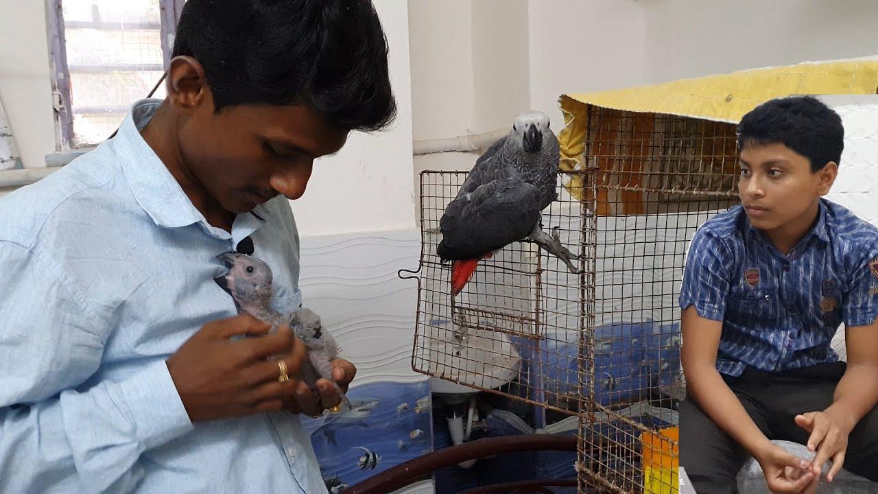 How To Start Bird Breeding Farm / How To Get Success In Bird Breeding / How To Tame A Bird.
