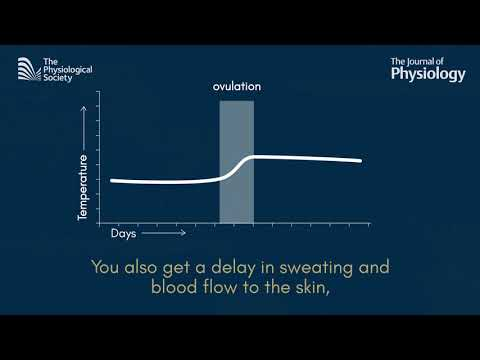 Thermoregulation and the menstrual cycle
