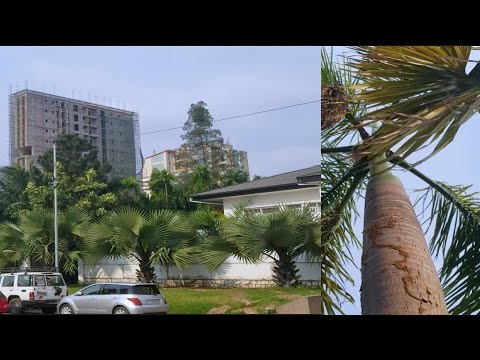 LE BOULEVARD LE PLUS CALME DE KINSHASA | Congo Kinshasa Vlog 2021 | Boulevard Tshatshi