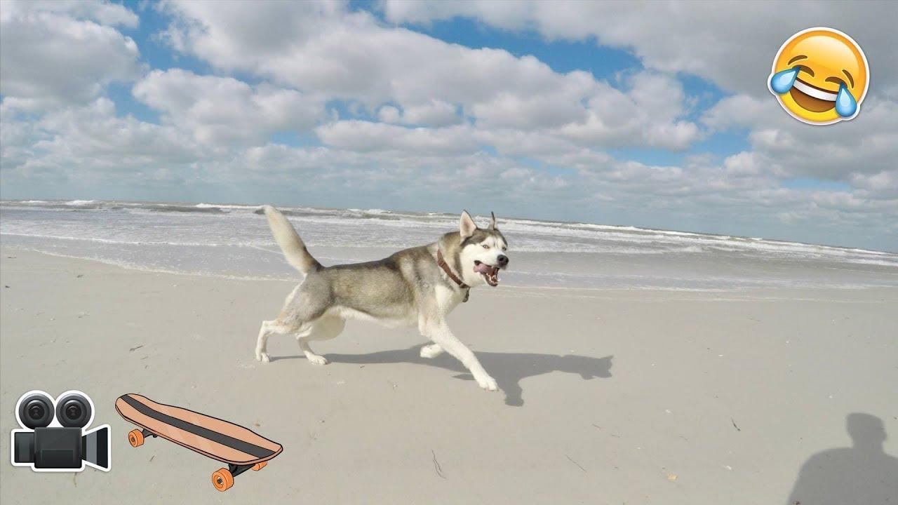Fun Day at The Husky Beach House!