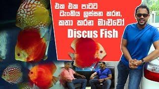 එක එක පාටට ටැංකිය ලස්සන කරන, කතා කරන මාළුවෝ Discus Fish | Pet Talk