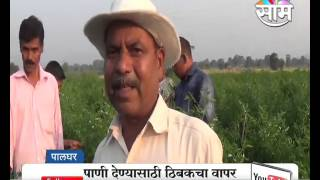 #Agrowon: Success Story of Kamlakar Shelar of Chilli Farming in Palghar