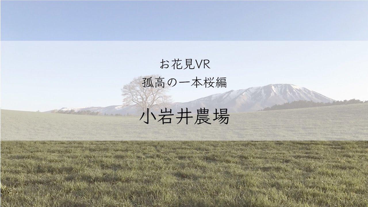 360度動画でエア花見!孤高の一本桜編 小岩井農場(岩手県)