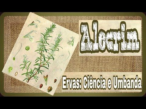 Ervas: Ciência E Umbanda #ALECRIM