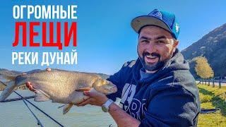 ОГРОМНЫЕ лещи реки Дунай | Современная фидерная ловля | На рыбалку в Европу #3