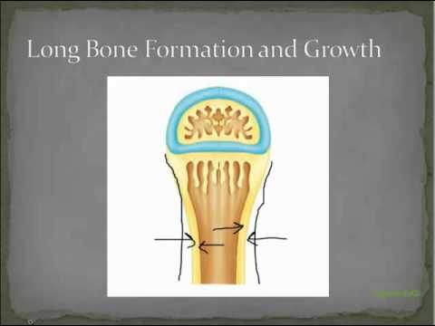 5c bone remodeling and growth