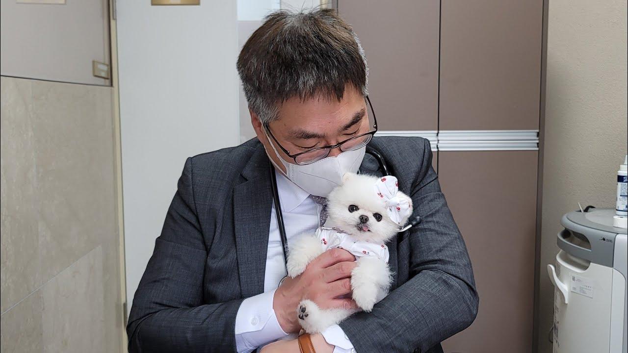 수의사 선생님에게 간식 달라고 조르는 뻔뻔한 강아지