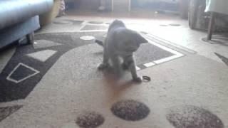 Весёлые игры котёнка Мари.