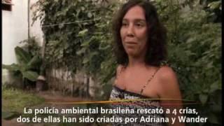 Aragoneses en Salvador de Bahia-Adriana 1ª parte
