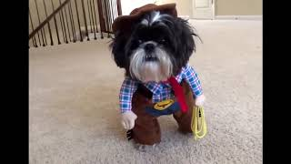 Funny Dogs in their Costumes