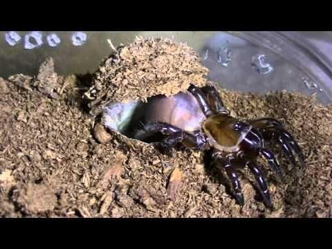 Trapdoor feeding compilation 5