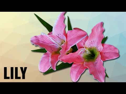 How To Ounce Lily Unciation