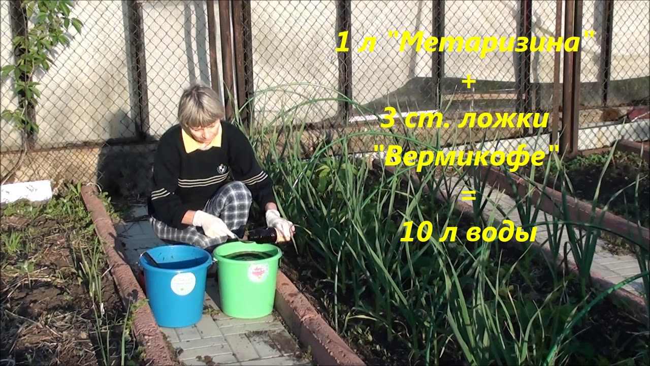 """""""Метаризин"""", как удобрение и средство защиты от насекомых - вредителей."""