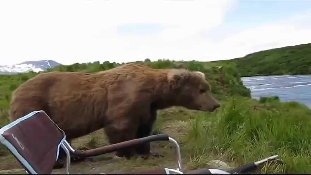 Прикольные новости про медведей медицина.симптомы и лечение кисты шиш