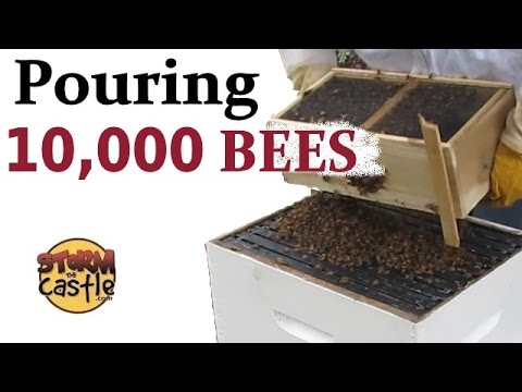 How To Install A Bee Package Into The Hive