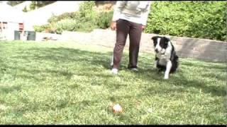 Treasure Hunt To Prevent Dog Behavior Problems - Clicker Dog Training In San Diego