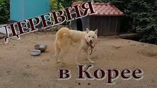 ДЕРЕВНЯ В КОРЕЕ (собачки на месте ;)
