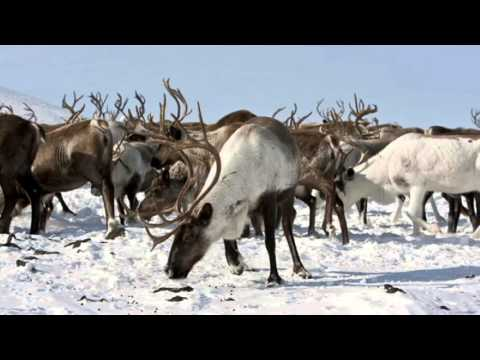 Canadian arctic tundra