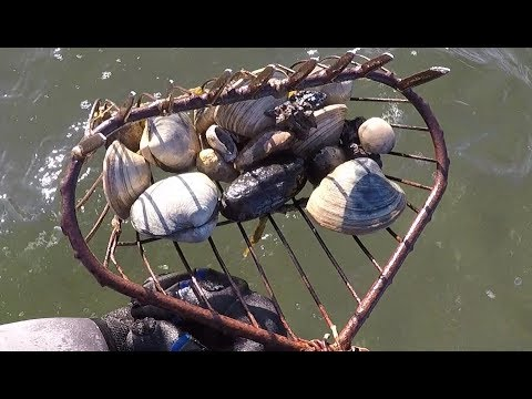 Clamming Catch And Cook: EASY Baked Clam Recipe!