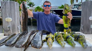 Invasive IGUANA & Snakehead- Catch Clean Cook- AMAZING Iguana Recipe!