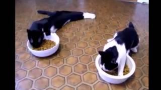 Бешеные коты)))) ПРИКОЛЫ