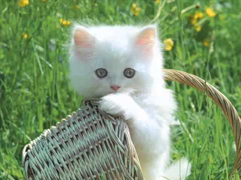 День Кошек. Пушистое счастье.  Всемирный день кошек - 1 марта 2013!!!