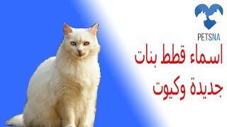 اسماء قطط انثى كيوت