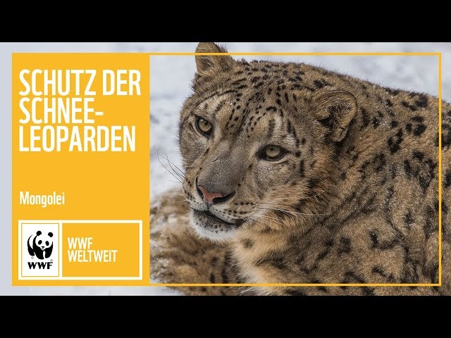 Mongolei: Schutz der Schneeleoparden | WWF weltweit | WWF Deutschland