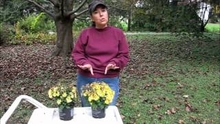 Gardening Tip:  The Difference Between Floral and Garden Mums