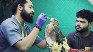 Wildlife Rescue and Animal Rehabilitation at RESQ, Pune | India