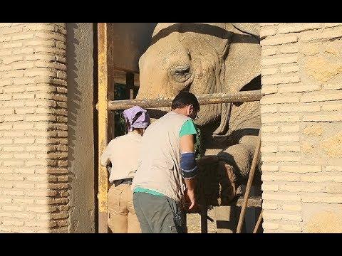Un día con Flavia ¿Quieres pasar una mañana con la elefanta del Zoo?