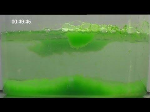 euronews science - Micro-algae is new energy source