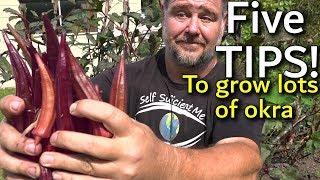 5 Tips How to Grow a Ton of Okra in a Raised Garden Bed