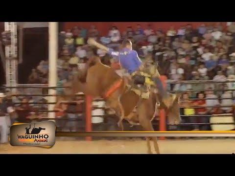Waguinho Animal - Campeão Cutiano da Festa do Peão de Ouro Verde 31/03/18