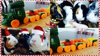 A Festive Veggie DIY (Train) For Guinea Pigs| Pigmas 2015