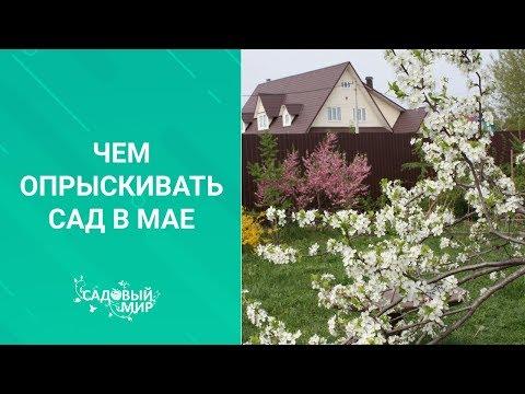 Чем опрыскивать сад в мае