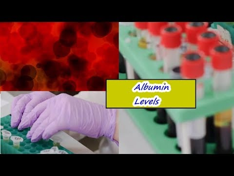 Albumin Levels – High, Low, Normal Range