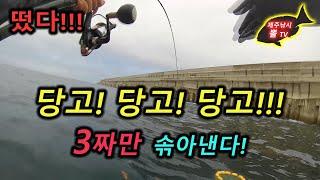 제주도 벵에돔 당고낚시- 하효앞바다,강정해군기지 - 긴꼬리 벵에돔,尾長グレ,Opaleye fishing in Jeju island