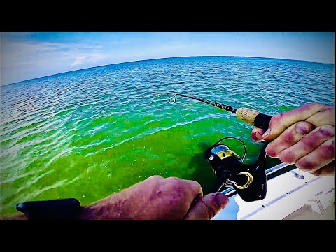 Catching Triple Tail, PORT ST JOE (PART 1)