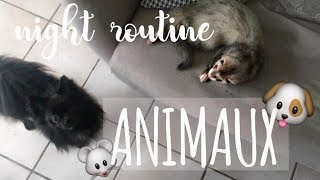 ♡ NIGHT ROUTINE ANIMAUX   (furet,chiot,souris)