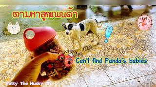 Office Dogs:Can't found Panda 's babies ตามหาลูกแพนด้าไม่เจอเลย ซ่อนลูกไว้ที่ไหนนะ