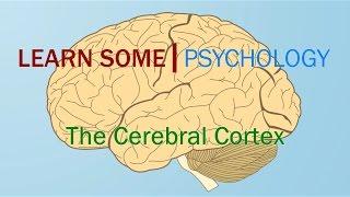 Cerebral Cortex