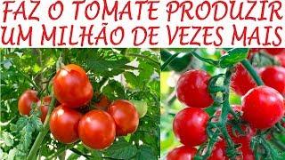 Adubos e Dicas de como Produzir mais Tomates
