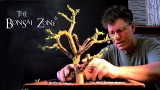 In part 2, I plant the large Jade cutting in a GIANT bonsai pot and...