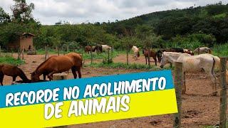 FAZENDA LABORATÓRIO BATE RECORDE NO ACOLHIMENTO DE ANIMAIS EM 2020