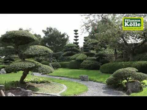 Gartengestaltung japangarten i pflanzen k lle youtube - Japangarten pflanzen ...