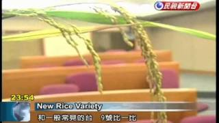 Asia University pioneers new rice with increased output and shorter planting cycle