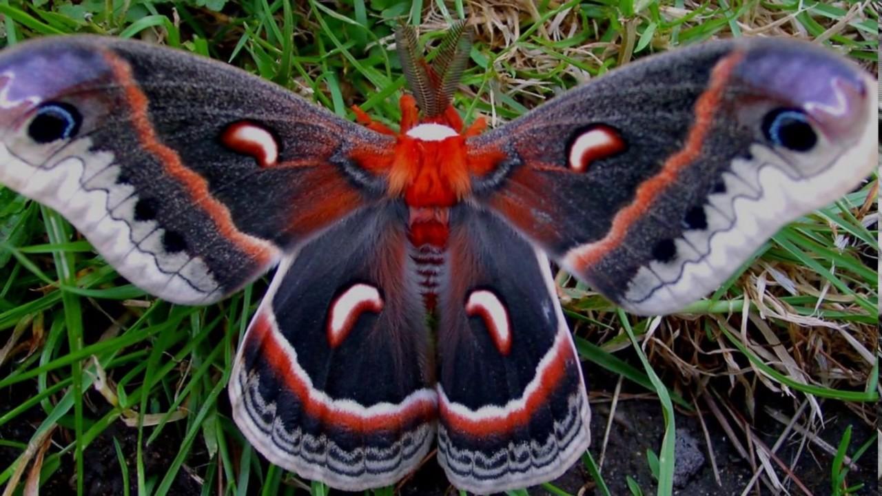 Самые красивые бабочки мира YouTube