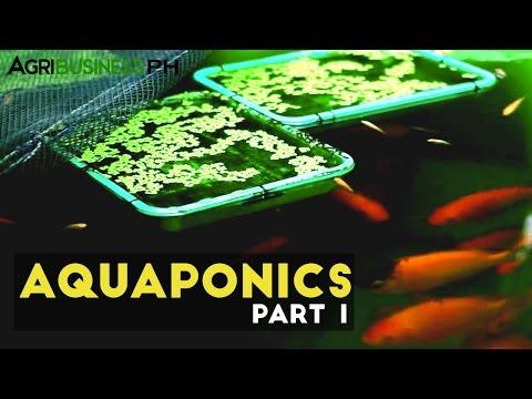 Aquaponics Part 1 : Aquaponics in the Philippines | Agribusiness Philippines