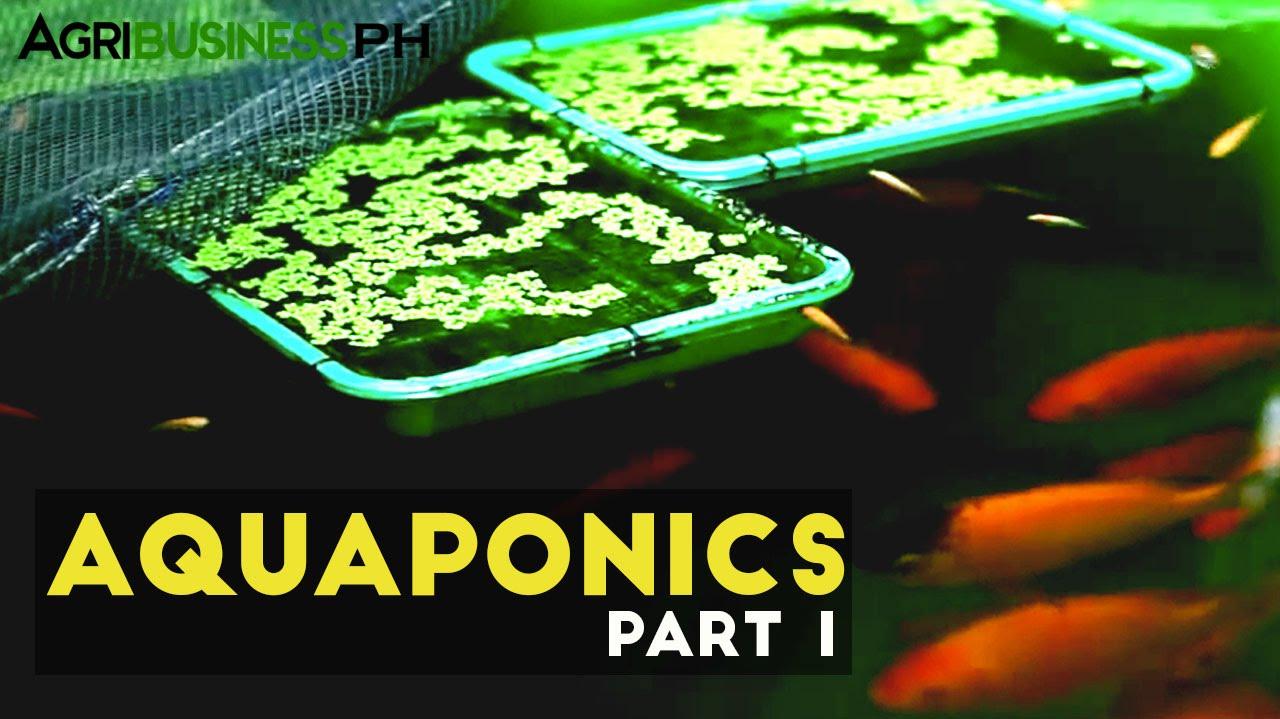Aquaponics Part 1   Aquaponics In The Philippines